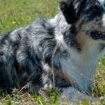 Mable_30._August_2009_0005