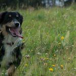 Hunde_JS_2011.09.04_0079