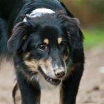 Hunde_JS_2011.09.10_0123
