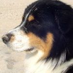 Sylt_2008_060.001